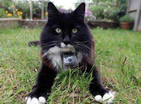 Биологи изучили ночную жизнь кошек