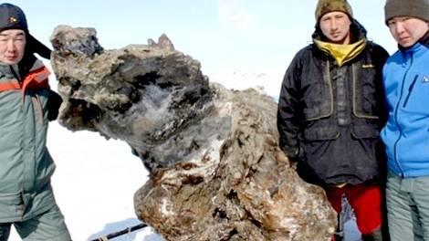 Находка Русских ученых позволит клонировать мамонта