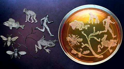 Микробы могут влиять на эволюционное развитие организмов-носителей