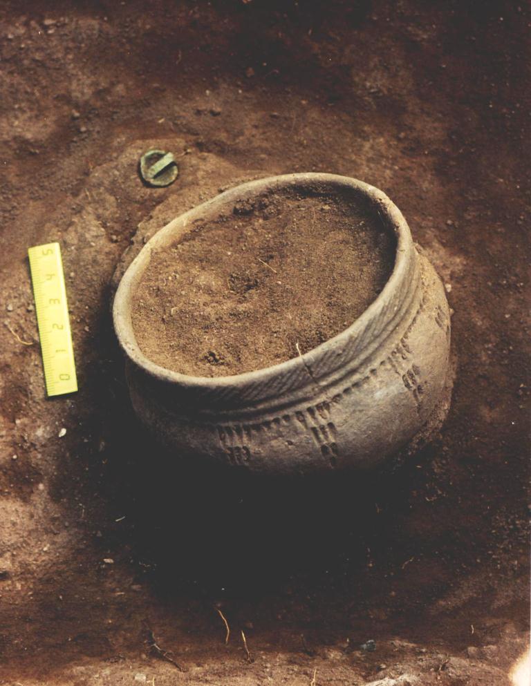 В Гарварде начали изучение археологических раскопок ДВФУ