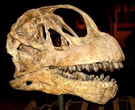 Camarasaurus_lentus