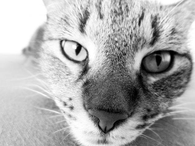 Место каждого животного в пищевой цепи можно узнать по форме зрачка.